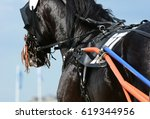 Harness Horse Racing In Detail...
