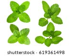 fresh herb leaf. mint leaves... | Shutterstock . vector #619361498