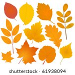 autumn leaves collection | Shutterstock .eps vector #61938094