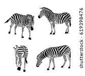 Set Of Zebra  Vector...