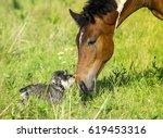 Horse With Miniature Schnauzer