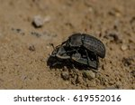 two mating bugs on sand. macro... | Shutterstock . vector #619552016