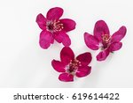 Red Flowers Isolated On White...