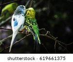 A White   Green Kissing...