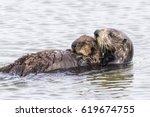 A Southern Sea Otter  Enhydra...
