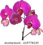 illustration with dark pink...   Shutterstock .eps vector #619778135