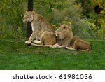 Pair of lions - stock photo