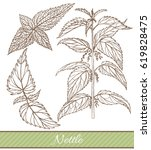 vector hand drawn isolated... | Shutterstock .eps vector #619828475