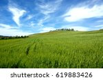colors of spring  cornfield in... | Shutterstock . vector #619883426