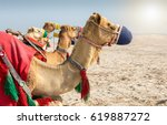 colorful camels in the desert...   Shutterstock . vector #619887272