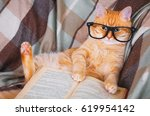 Stock photo cute red cat in glasses lying on sofa with book 619954142