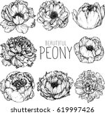 peony flowers drawing... | Shutterstock .eps vector #619997426