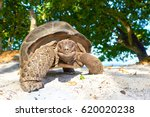 Stock photo laughing turtle seychelles giant tortoise wildlife 620020238