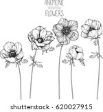 Stock vector anemone flowers drawing vector illustration and line art 620027915