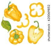 watercolor marker illustration... | Shutterstock . vector #620069852
