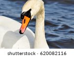 white swan on a sunny spring... | Shutterstock . vector #620082116