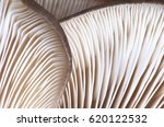 Close Up Abstract Background Of ...
