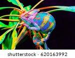 yemen chameleon isolated on... | Shutterstock . vector #620163992