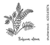 flora  hedysarum  hedysarum... | Shutterstock .eps vector #620165876