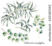 watercolor set with eucalyptus... | Shutterstock . vector #620182442