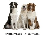Group Of Three Mixed Breed Dogs ...