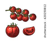 set of hand drawn tomatoes... | Shutterstock .eps vector #620250812