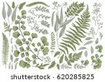 set with leaves. botanical... | Shutterstock .eps vector #620285825