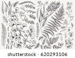 Set with leaves. Botanical illustration. Fern, eucalyptus, boxwood. Vintage floral background. Vector design elements. Isolated. Black and white. | Shutterstock vector #620293106