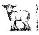 beautiful easter cute lamb....   Shutterstock .eps vector #620334662
