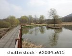 walkway and pond and tree in... | Shutterstock . vector #620345615