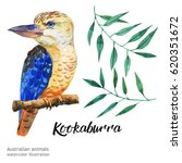 australian animals watercolor... | Shutterstock . vector #620351672