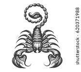 scorpion drawn in engraving... | Shutterstock .eps vector #620371988