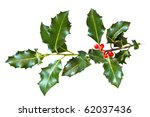 Holly Leaves And Berries...