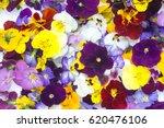 edible flowers   food flowers   ...   Shutterstock . vector #620476106