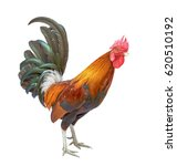Bantam Chicken Rooster Isolate...