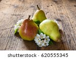 red pear  flowering pear  on... | Shutterstock . vector #620555345