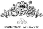 rose flowers drawing... | Shutterstock .eps vector #620567942