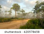 A Dirt Road And A Pine Forest...