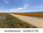 Dirt Road Through Poppy...
