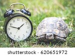 Time Management Concept With Alarm Clock And A Wild Turtle In Spring Time - stock photo