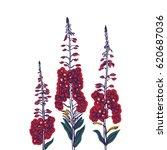 fireweed. wildflowers.... | Shutterstock .eps vector #620687036
