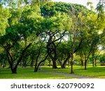 green park of bangkok  thailand.   Shutterstock . vector #620790092