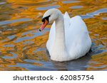 Swan In Water With Reflections...