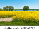 spring landscape with yellow...   Shutterstock . vector #620864222