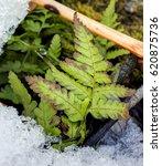 Hdr Photo Of A Small Fern Leaf...