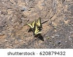 yellow butterflies on ground | Shutterstock . vector #620879432