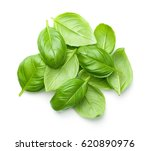 basil leaves isolated on white... | Shutterstock . vector #620890976