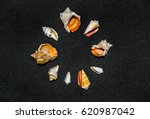 Small Seashell Circle Formed O...