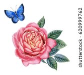 watercolor hand painted roses.... | Shutterstock . vector #620999762