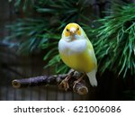 Small photo of Amadina finch or gouldian finch bird on a branch on green background